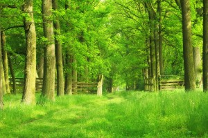 Green Forest HD Wallpapers